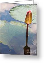Monet Water Lily Stem Red Orange Greeting Card