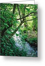 Monet's Garden Stream Greeting Card