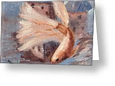 Mongo Betta Fish Greeting Card by Brenda Thour