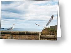 Monitored Seagull Take-off Greeting Card