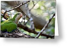 Monk Parrot Greeting Card