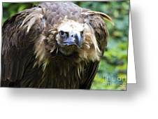 Monk Vulture 3 Greeting Card