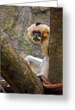 Monkey Chillin Greeting Card