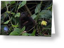 Monkey Face Greeting Card