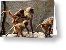 Monkey Family Greeting Card