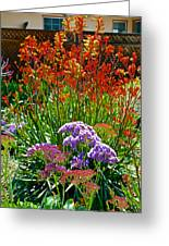 Yellow-orange Kangaroo Paws And Sea Lavender By Napier At Pilgrim Place In Claremont-california Greeting Card