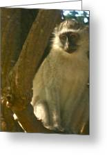 Monkey In The Tree Greeting Card