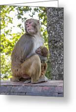Monkey Mom Greeting Card