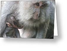 Monkey Mother 3 Greeting Card
