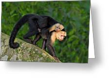 Monkey On My Back Greeting Card