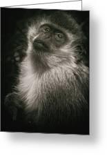 Monkey Portrait Greeting Card
