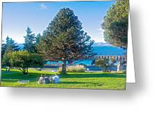 Monkey Puzzle Tree In Central Park In Bariloche-argentina  Greeting Card