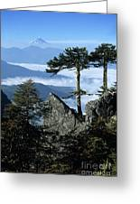Monkey Puzzle Trees In Huerquehue National Park Greeting Card