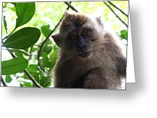 Monkey See Greeting Card