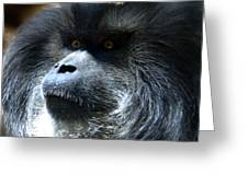 Monkey Stare Greeting Card
