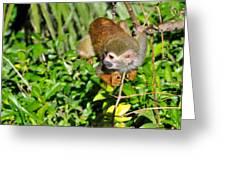 Monkey Time Greeting Card