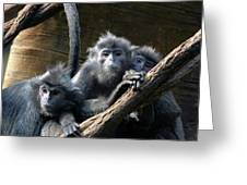 Monkey Trio Greeting Card