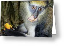 Monkey With His Mango Greeting Card