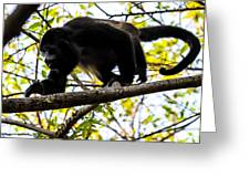 Monkey2 Greeting Card