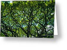 Monkeypod Canopy Greeting Card