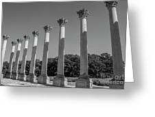 Monochrome Columns Greeting Card