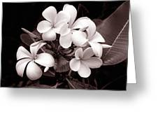 Monochrome Hawaii No. 3 Greeting Card