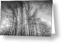 Monochrome Sunset Trees Greeting Card