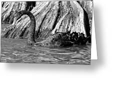 Monochrome Swimming Black Swan Greeting Card