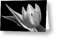 Monochrome Tulip Greeting Card