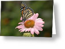 Monorch Butterfly Greeting Card