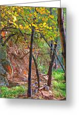 Monrovia Canyon In Fall Greeting Card