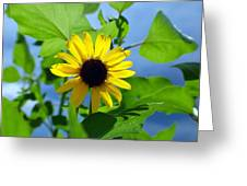 Monsoon Sunflower Greeting Card