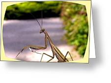 Monster Mantis Greeting Card