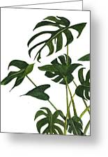 Monstera Bunch  Greeting Card