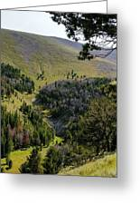 Montana Call Of The Wild Greeting Card