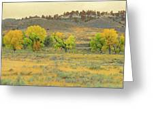 Montana Cottonwood Reverie Greeting Card by Cris Fulton