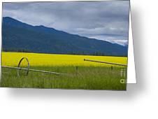 Montana Gold Greeting Card