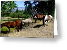 Montana Horses Greeting Card