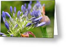 Montana Purple And Blue Greeting Card