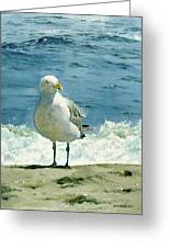 Montauk Gull Greeting Card by Tom Hedderich