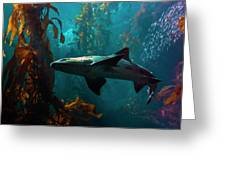 Monterey Depths Greeting Card