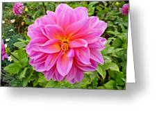 Monterey Pink Greeting Card