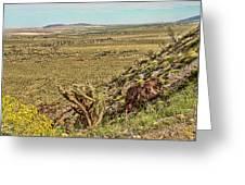 Montezuma Rd-borrego Occitillo Wells View Greeting Card