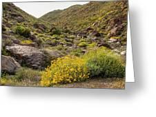 Montezuma Rd Daisey Garden Greeting Card