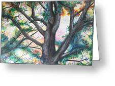 Monticello Tree Greeting Card
