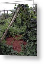 Monticello Vegetable Garden  Tee Pee Greeting Card