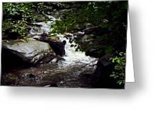 Montreat Creek North Carolina Greeting Card