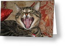 Monty's Yawn Greeting Card
