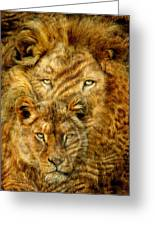 Moods Of Africa - Lions 2 Greeting Card