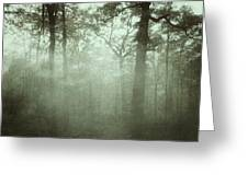 Moody Foggy Forest Greeting Card